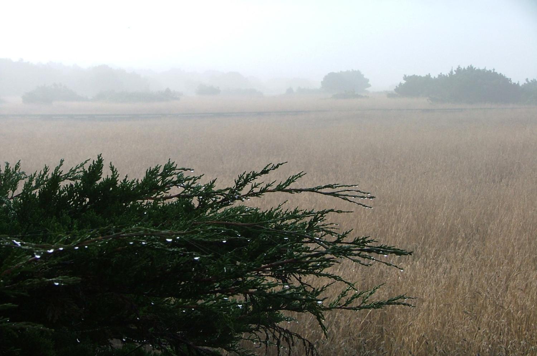 Misty+Morning.jpg
