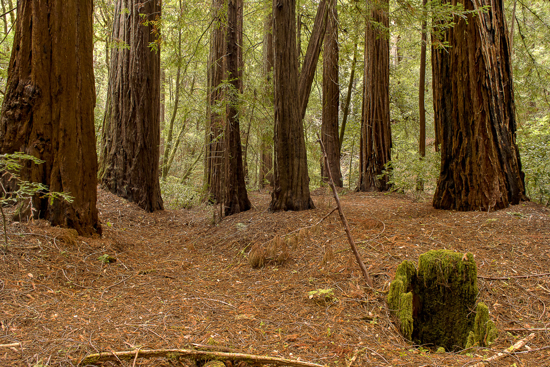 Maillard Redwoods State Natural Reserve