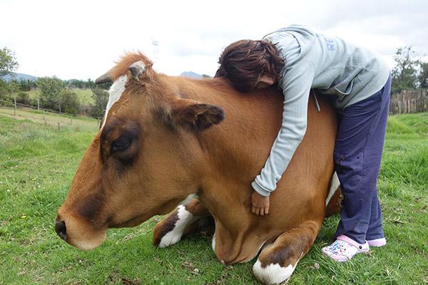 Animal Protection