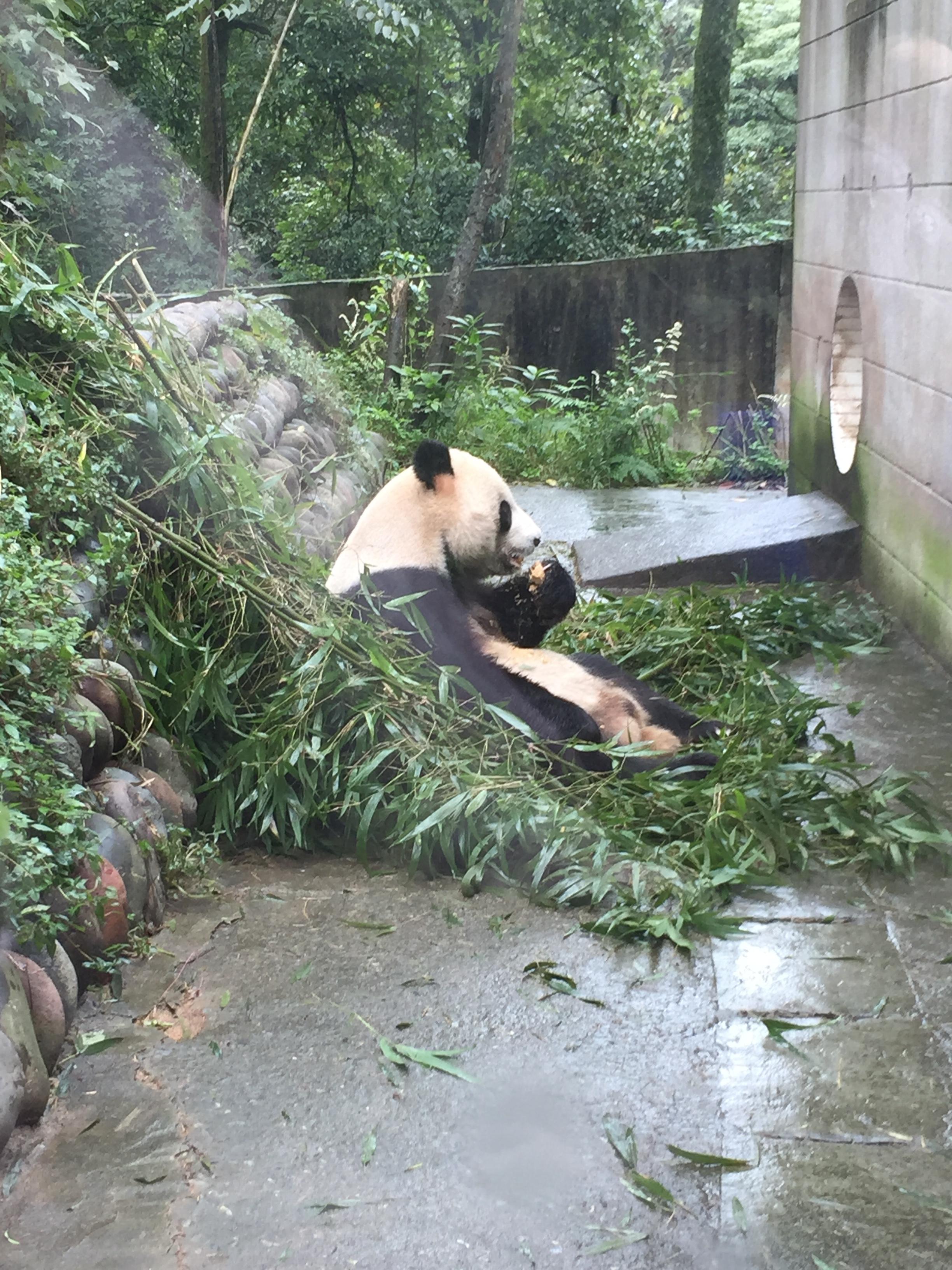 Wu Gang and fresh bamboo