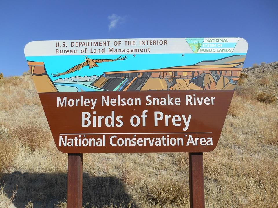Mission - To support the management and conservation of the Morley Nelson Snake River Birds Of Prey National Conservation Area through science, education, outreach, and partnerships.