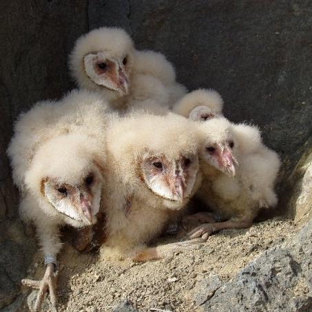 Bird babies 2 - DRIVE.jpg