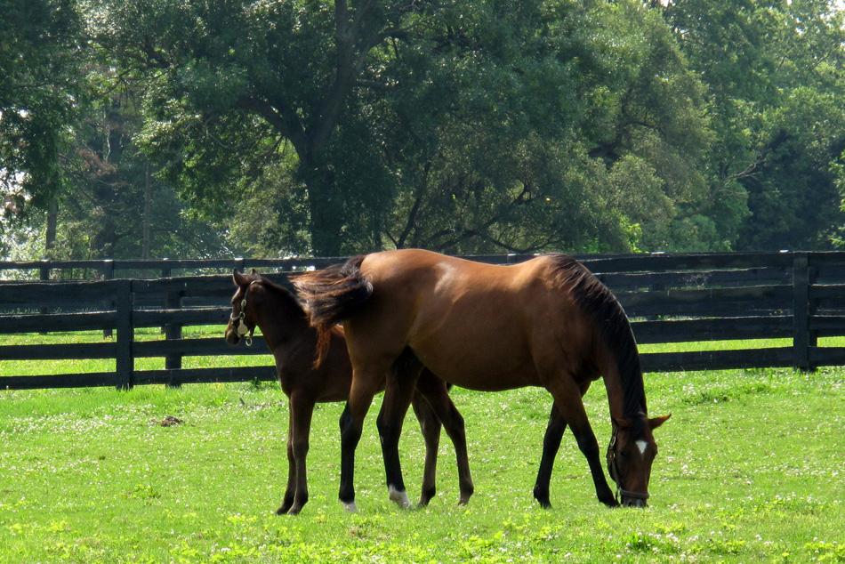 horse-and-foal-2.jpg