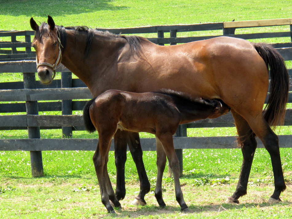 horse-and-foal-3.jpg