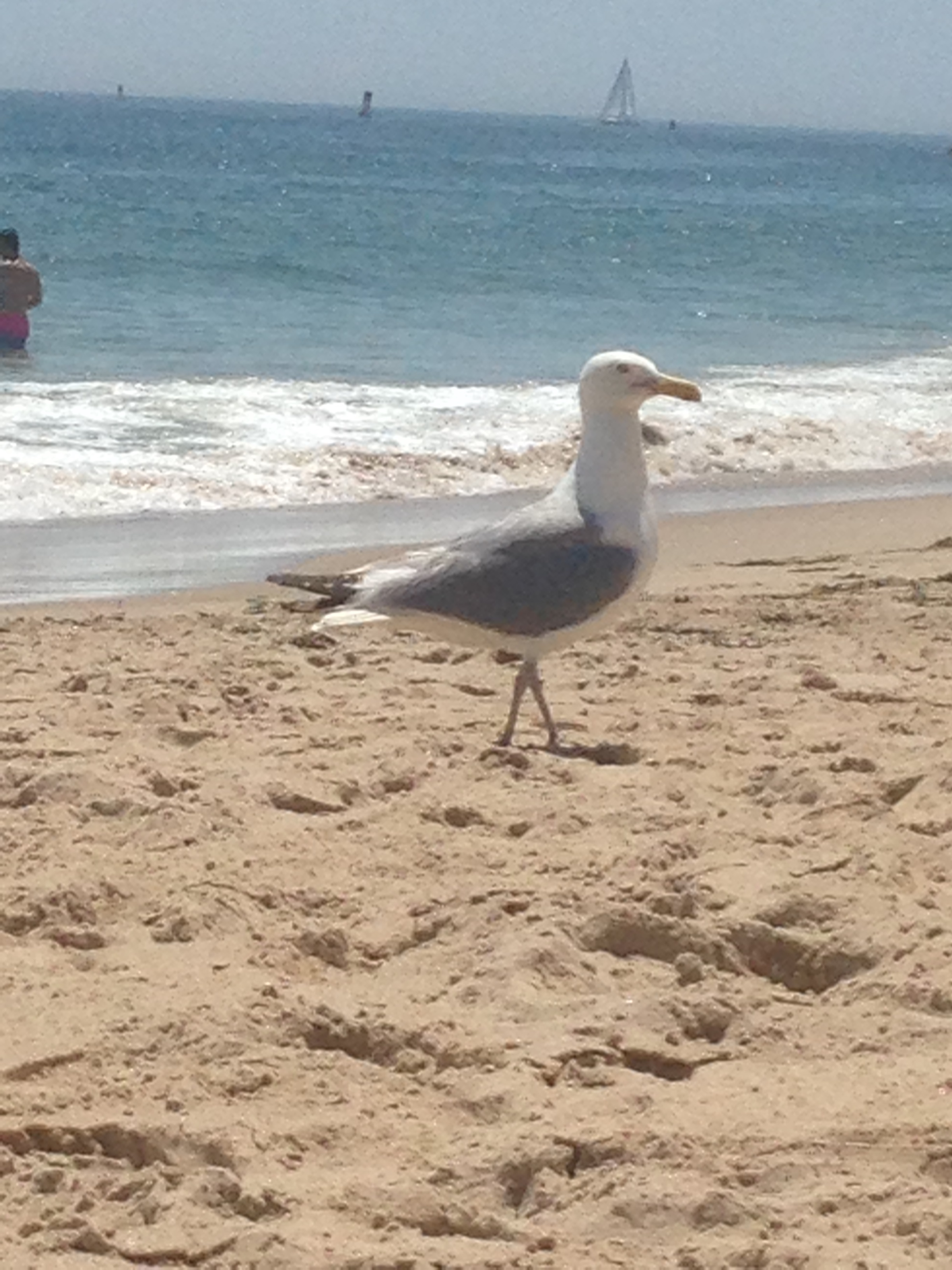 This guy ate my sandwich! But notice the beautiful water in the background!