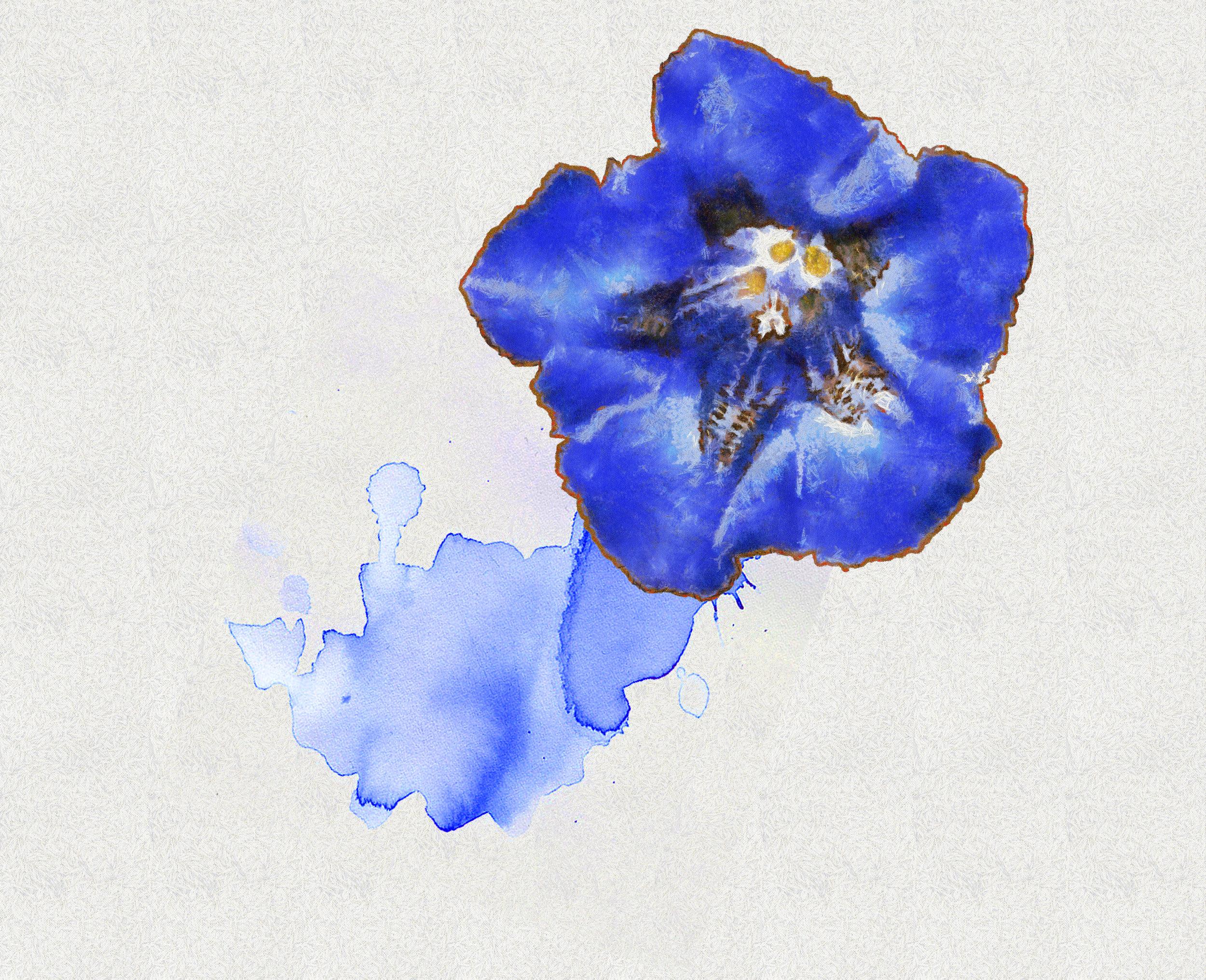 -_Flower_15e_-_DAP_Benson.jpg