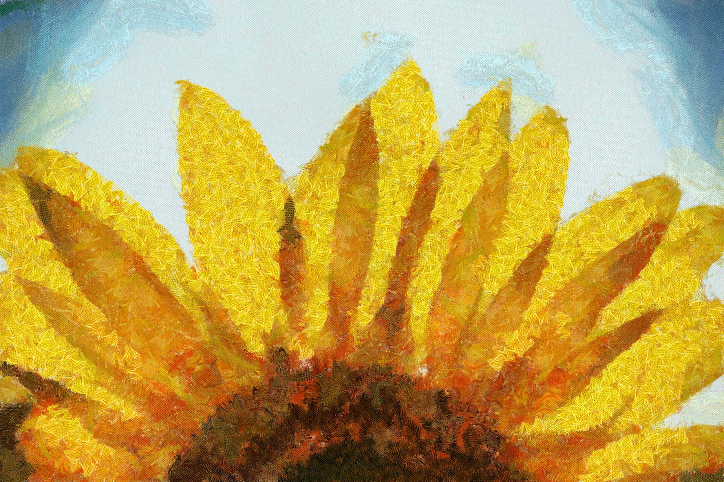 sunflower-2071186_960_720_DAP_Camille.jpg