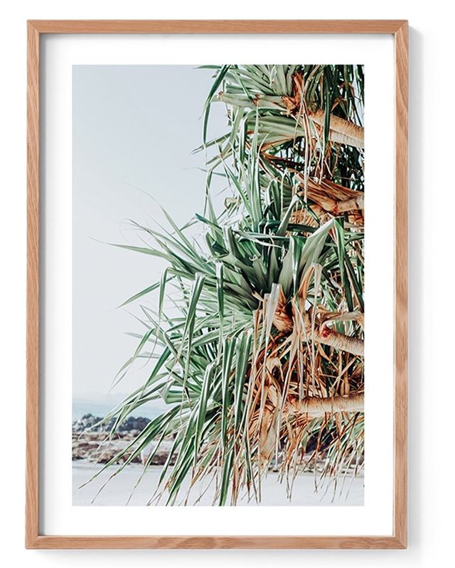 Excited to have some of my prints now available @blinq.art gallery in Paddington. ✨🙏 Pandanus #byronbay #byronbaylife #pandanus #art #interiordesign #styling #photography