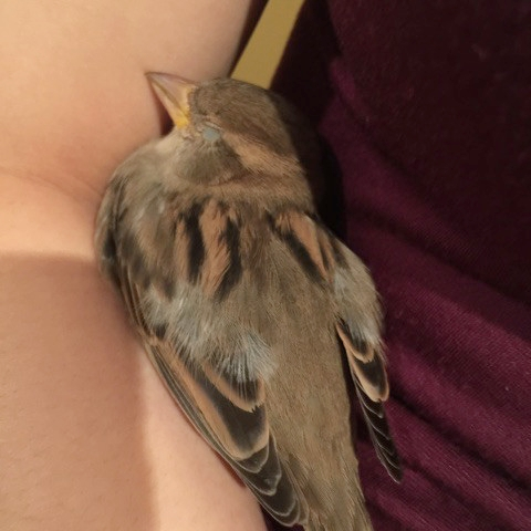 bird-sleep-on-arm.jpg