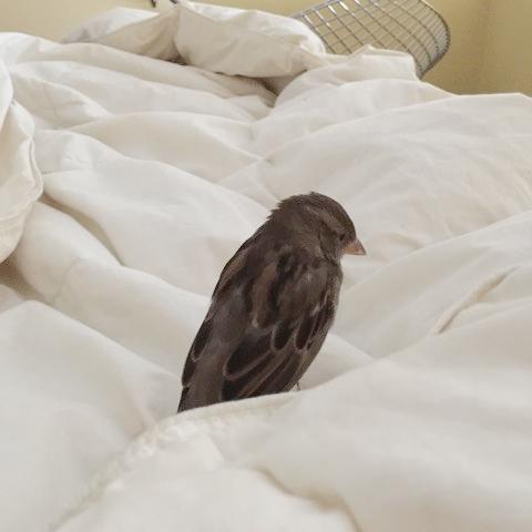 sparrow-wakes-me-up.jpg