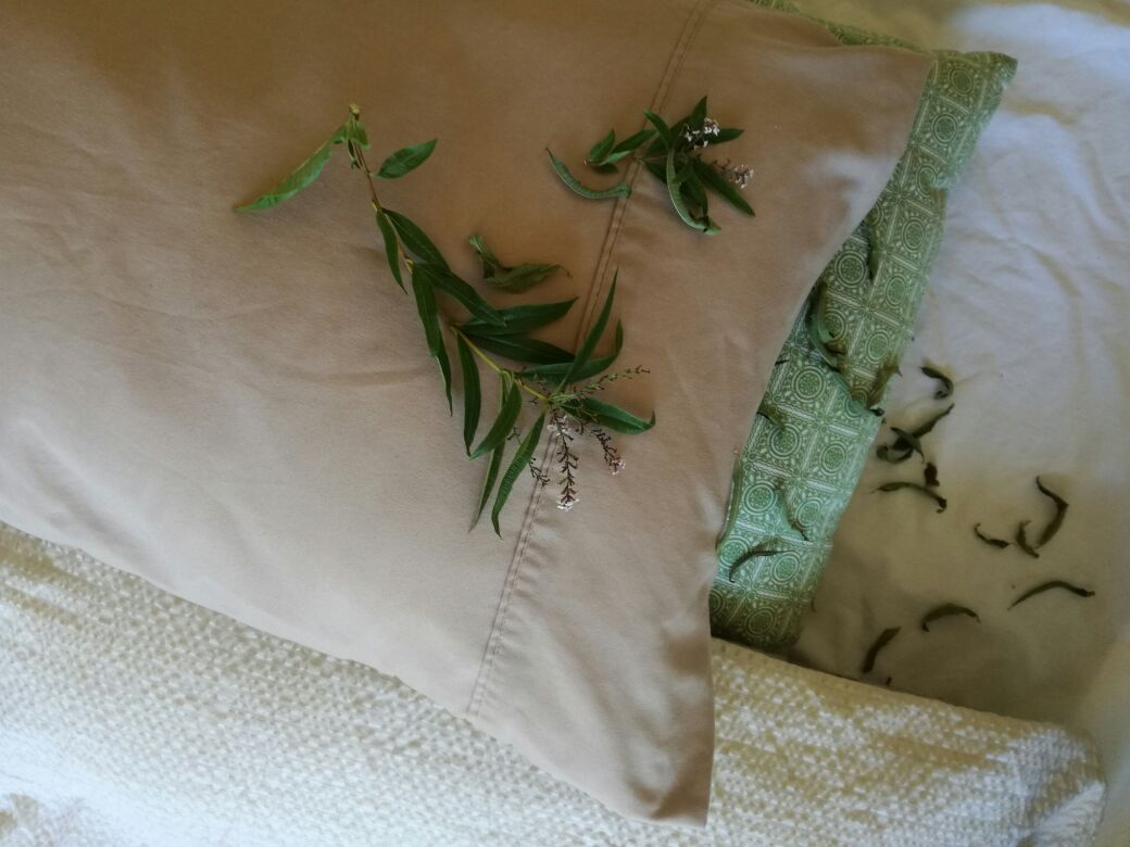 Dried verbena leaves in your pillow helps alleviate trouble sleeping