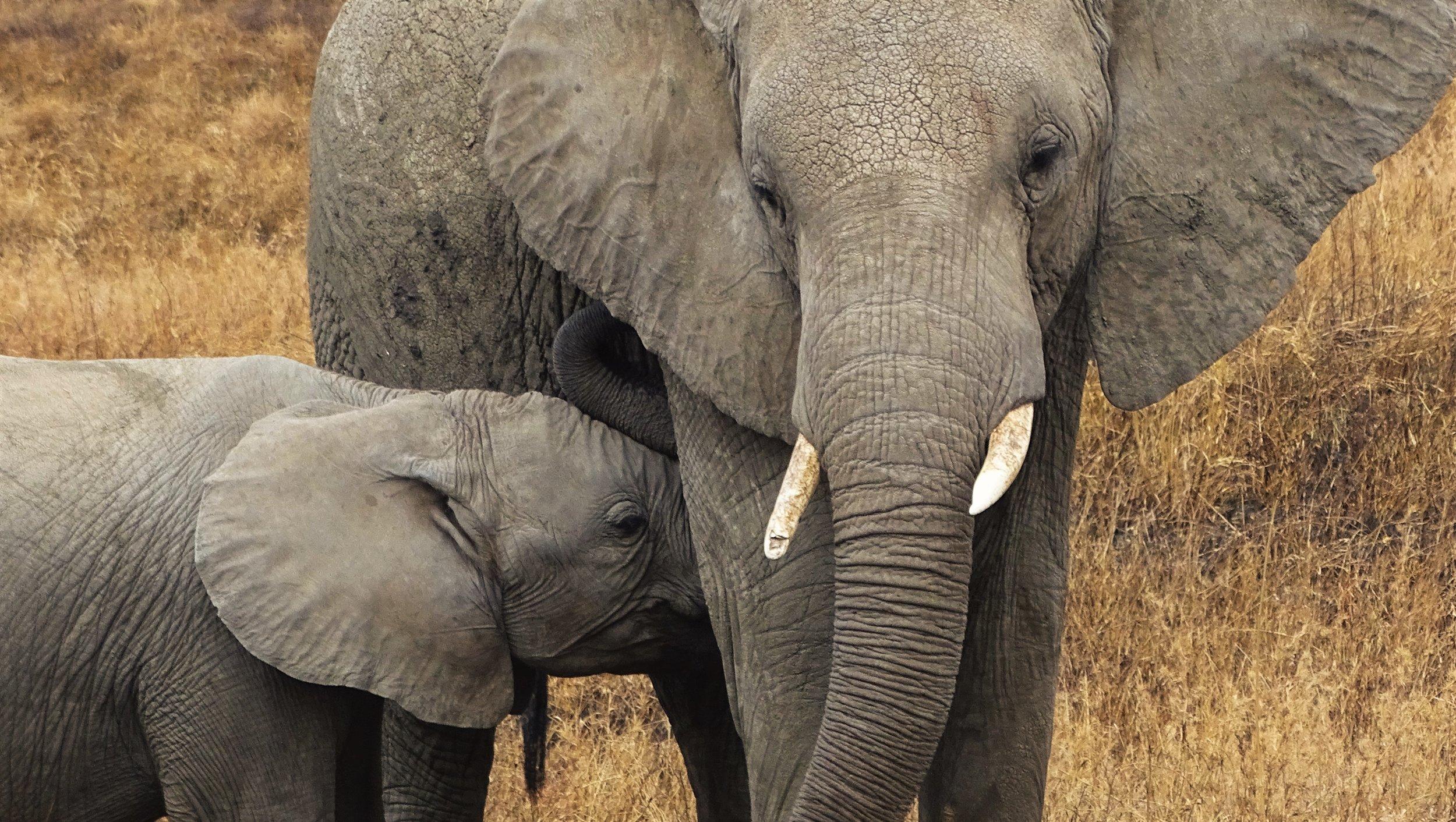 Serengeti-by-pbase.jpg