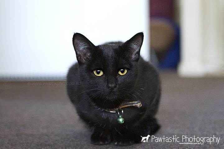 Black cat sitting on the floor