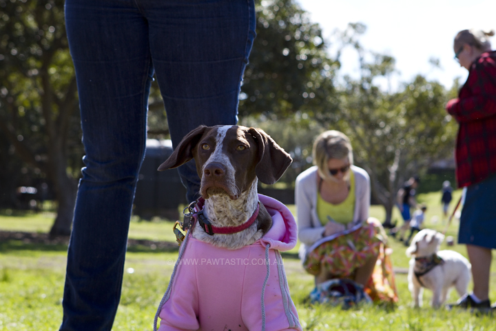 Muddy_Paws_Walk_002