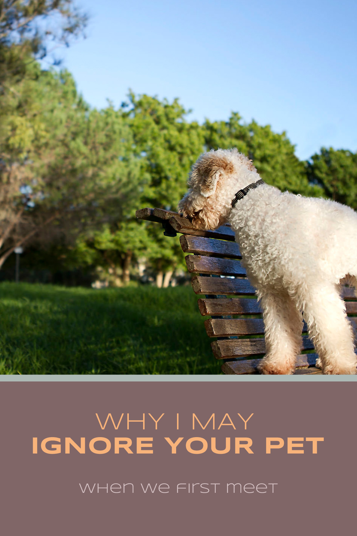 Why I May Ignore Your Pet When We First Meet | Sydney Pet Photographer