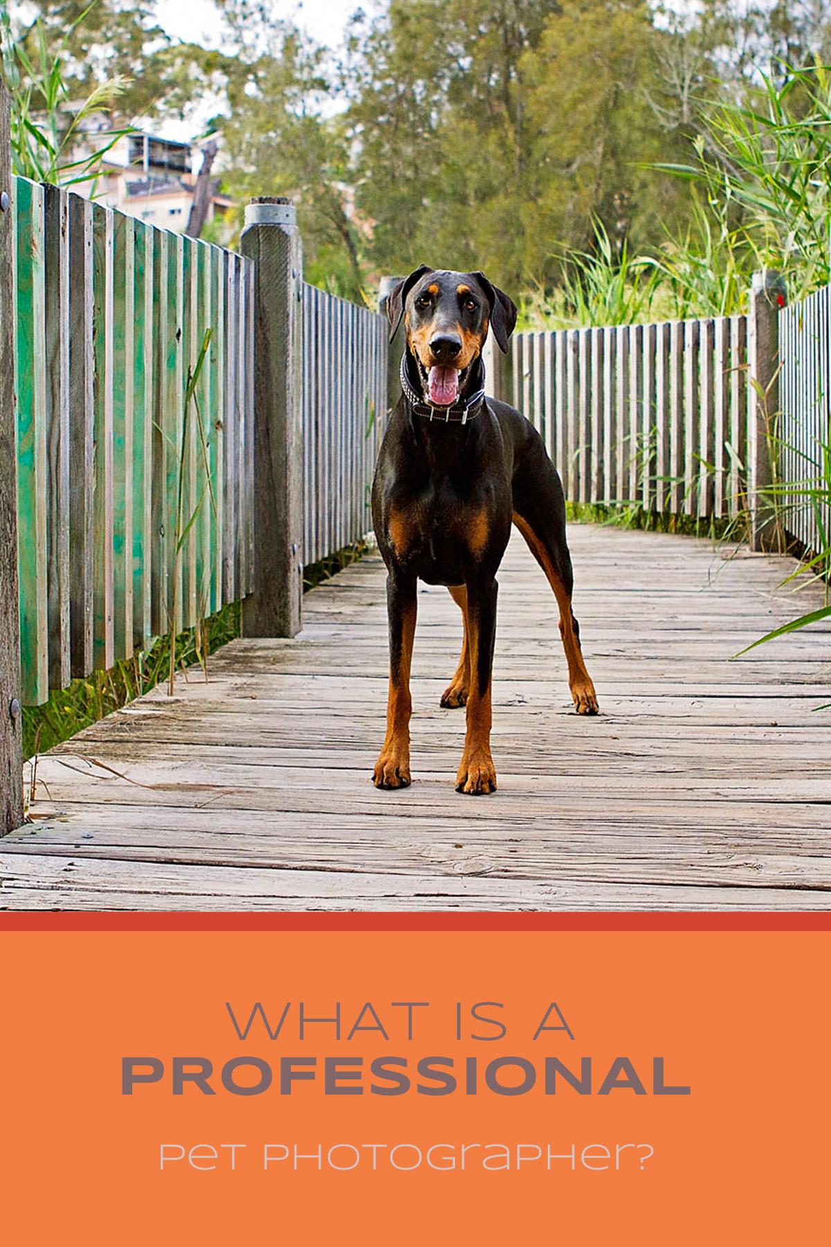 What is a professional pet photographer | Sydney Pet Photographer