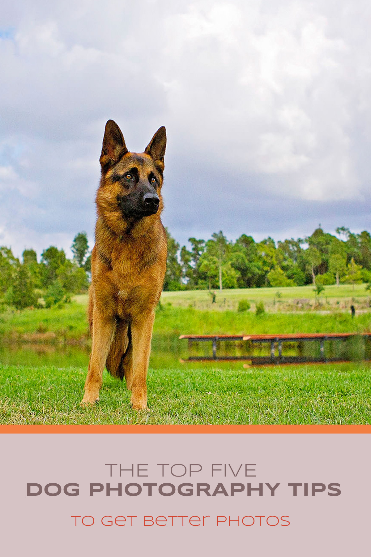 The top five (5) dog photography tips to get better photos | Sydney Dog Photographer