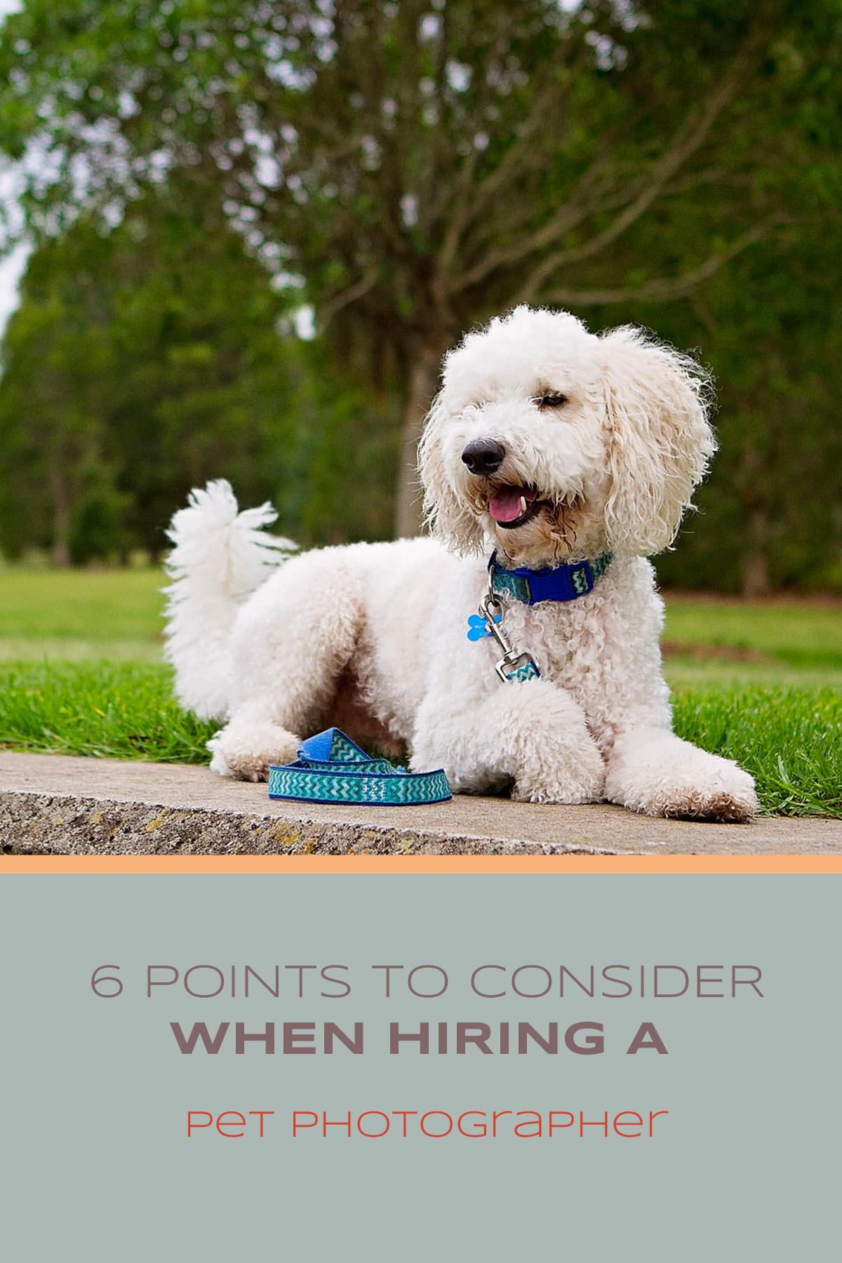 Six (6) points to consider when hiring a pet photographer   Sydney Pet Photographer