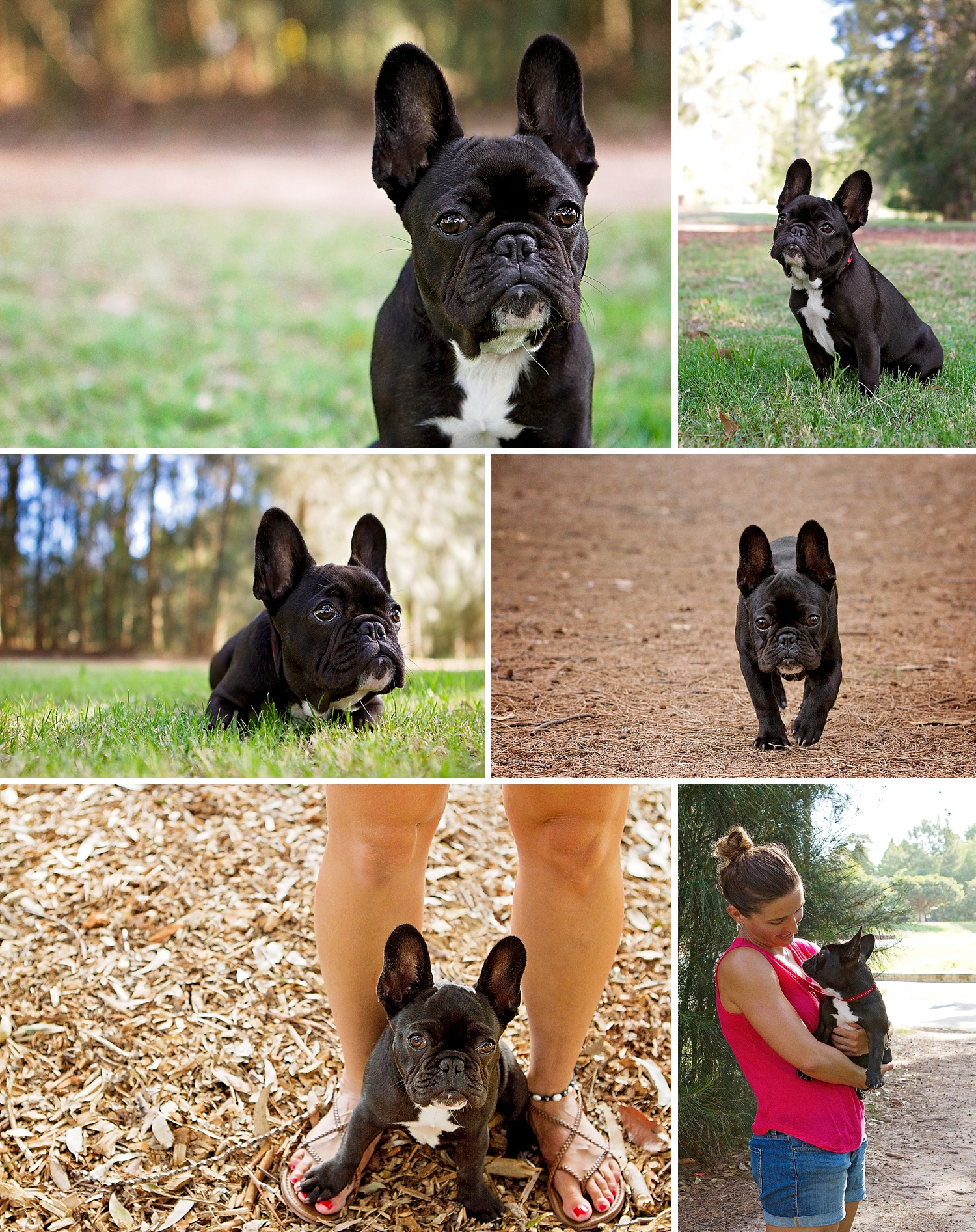 Jersey, the French Bulldog and her mum Michelle took part in the Dog Days of Summer with Sydney based pet photographer - Pawtastic Photography