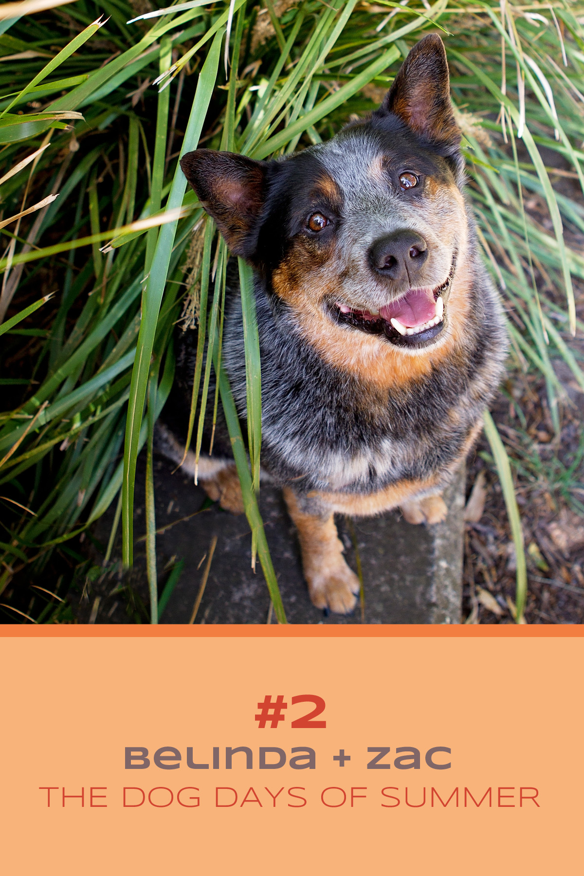 Blue Cattle dog Zac and his mum, Belinda, take part in the Dog Days of Summer at Sydney Park with Pawtastic Photography | Sydney Pet Photographer
