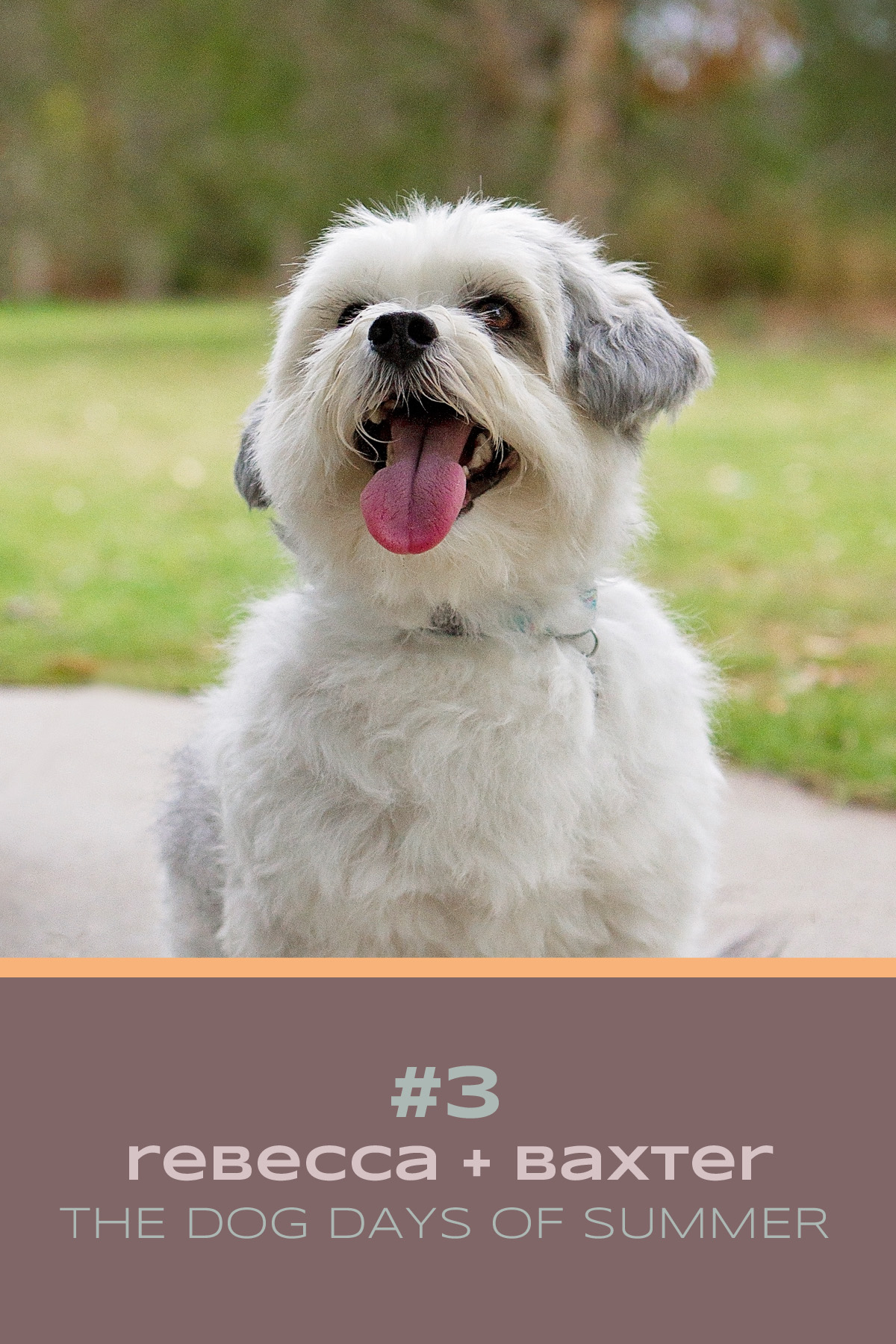 Meet Baxter, the Shih Tzu dog and his mum Rebecca who took part in the Dog Days of Summer with Pawtastic Photography | Sydney Pet Photographer