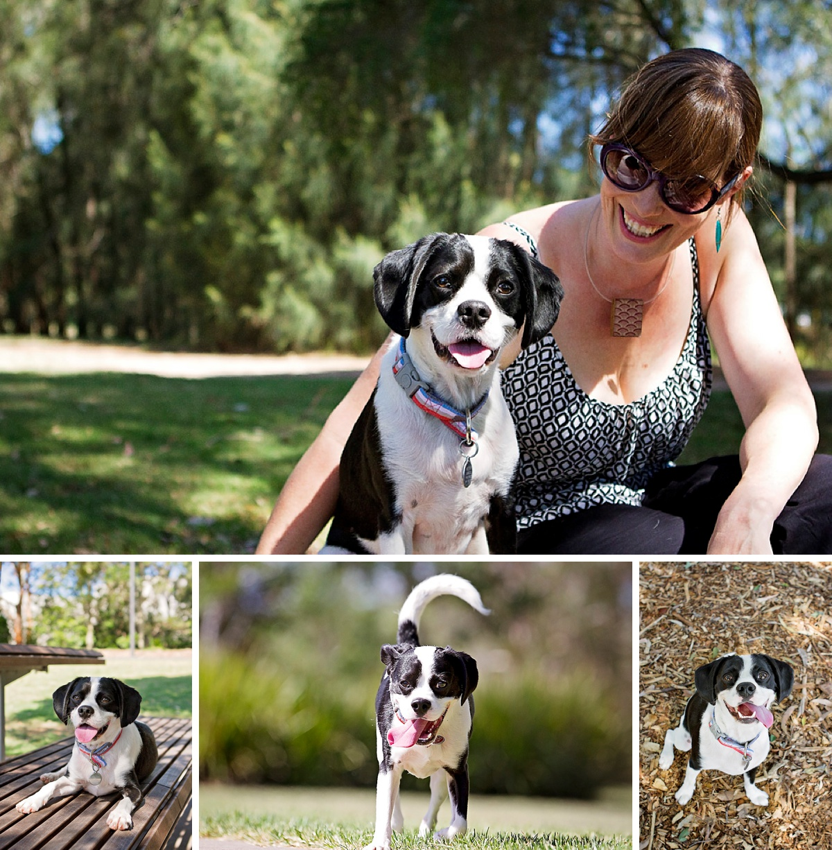 Next up in the Dog Days of Summer with Sydney pet photographer, Pawtastic Photography is Alix and her Cavalier cross Pug dog.