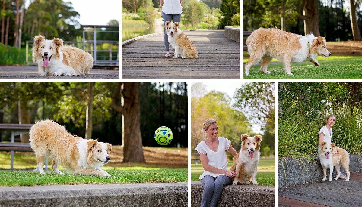 Border collie, Archie and his mum, enjoy playing ball during their photo session in the Dog Days of Summer with Sydney pet photographer, Pawtastic Photography