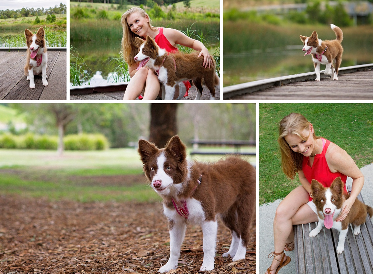 Brown Border Collie puppy took part in the Dog Days of Summer with Pawtastic Photography, Sydney based pet photographer