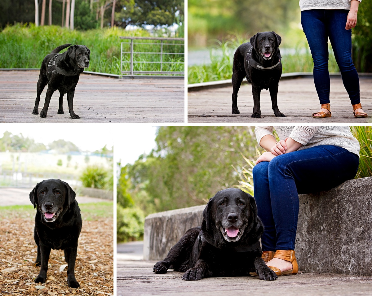 Black Labrador dog, Ralph and his owner pose for photographs for their Dog Days of Summer photo session with Sydney based pet photographer, Pawtastic Photography.