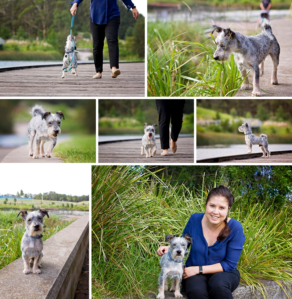 Schnauzer cross terrier dog plays with his owner during their photoshoot with local Sydney pet photographer, Pawtastic Photography