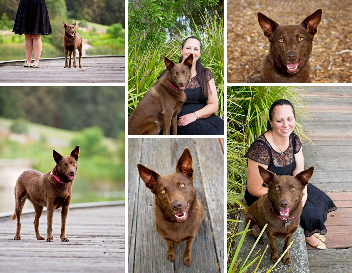 Chocolate Kelpie dog and her owner pose for photos during their Dog Days of Summer photo session with Pawtastic Photography, a local Sydney based pet photographer