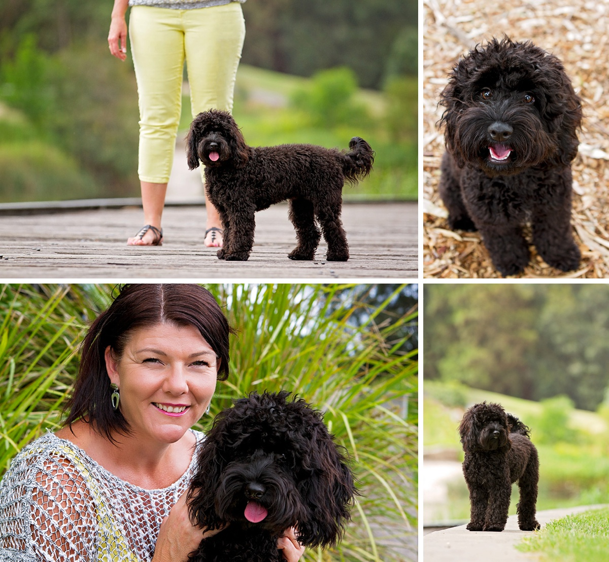 Black cavoodle poses with her owner during her photoshoot with Pawtastic Photography, a Sydney based pet photographer.