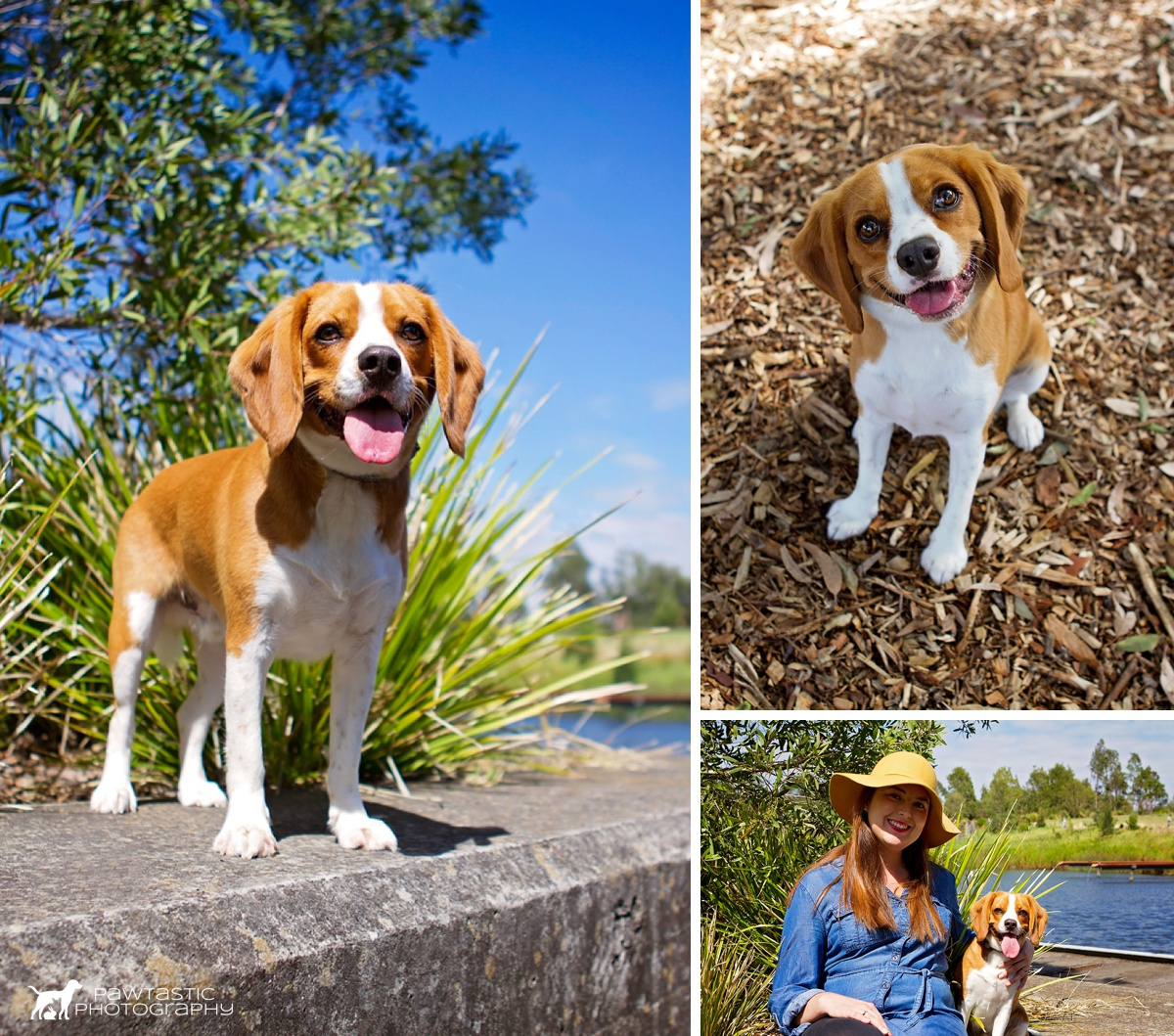 Beaglier, Spartacus, poses with a smile amid the various greenery and tree bark at Sydney Park. Next to him is his owner as they get their photos taken by professional pet photographer, Pawtastic Photography during their Dog Days of Summer session.