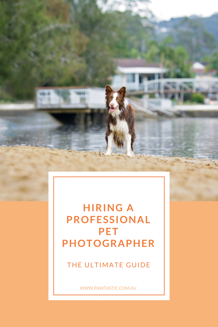 Whether you are actively looking for a professional pet photographer or just starting to think about hiring one, this resource is for you - The Ultimate Guide to Hiring A Professional Pet Photographer.