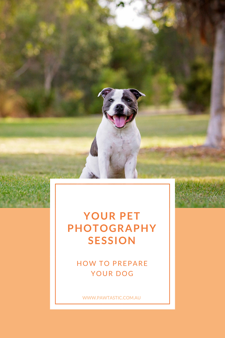 Have you ever wondered how to prepare your dog, what to plan for and how to get them ready for their photo shoot? Learn exactly what you need to do in order to prepare your dog for their pet photography session with Sydney based photographer, Pawtastic Photography.