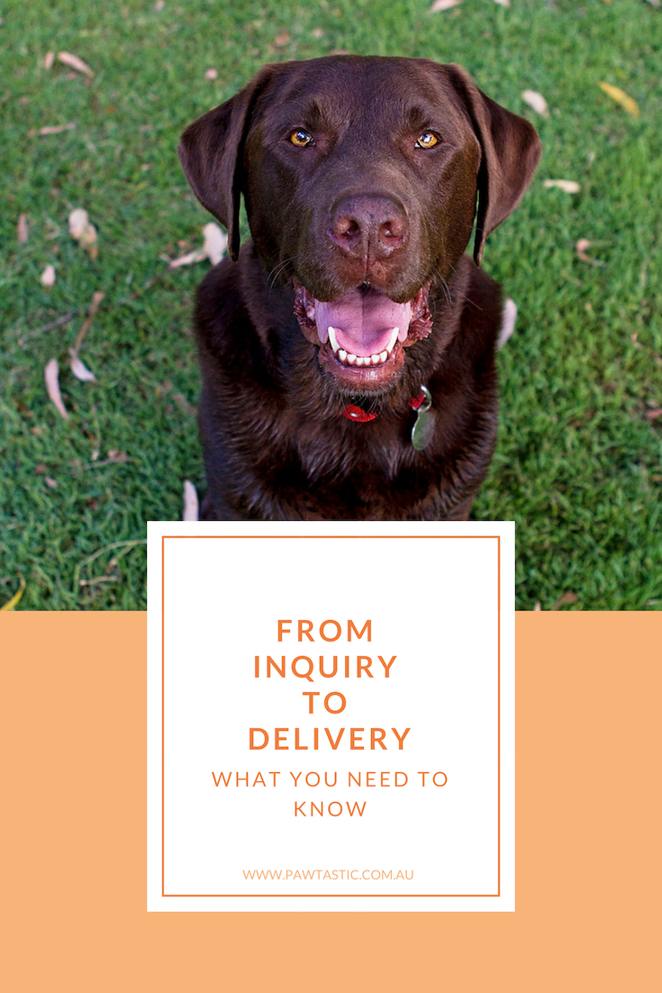 If you've never booked a pet photography session for your furbaby before before you may be a little unsure of how the process works. This post, From Inquiry To Product Delivery: What You Need To Know, shares with my client process from start to finish, so that you can get a behind the scenes glance at what goes on.