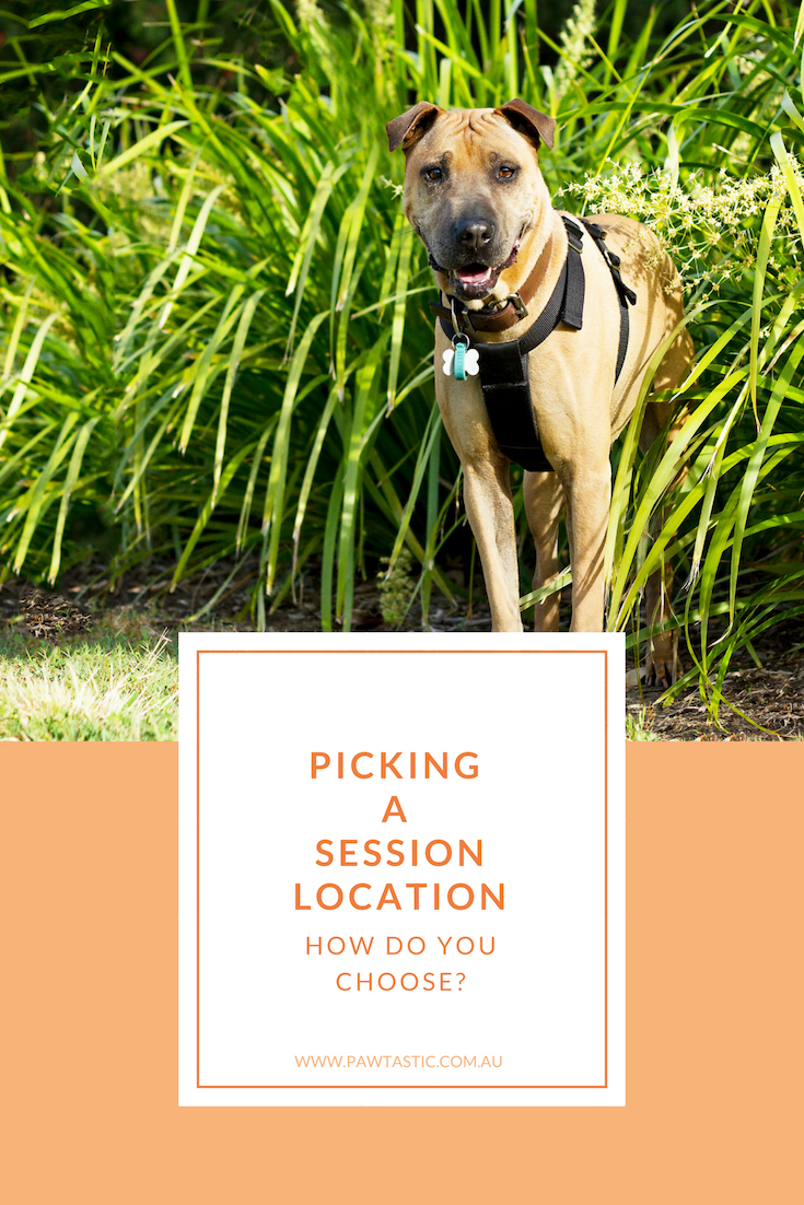 Do you wonder how it is that you choose the location for your pet photography session? What should you look for? Where should you be looking? This post covers the 4 main points you should consider when picking your session location with Sydney based photographer - Pawtastic Photography.