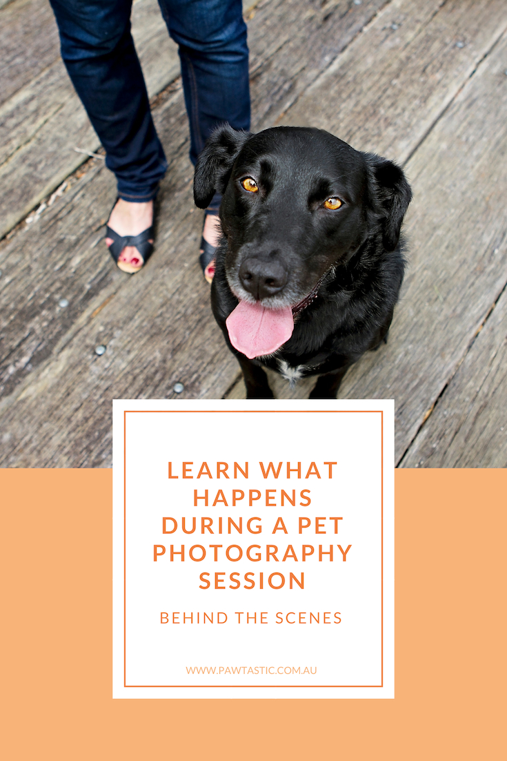 Ever wanted to know what happens at a pet photography session? Go behind the scenes with the latest post and find out what happens during a pet photography session with Pawtastic Photography, a Sydney based pet photographer.