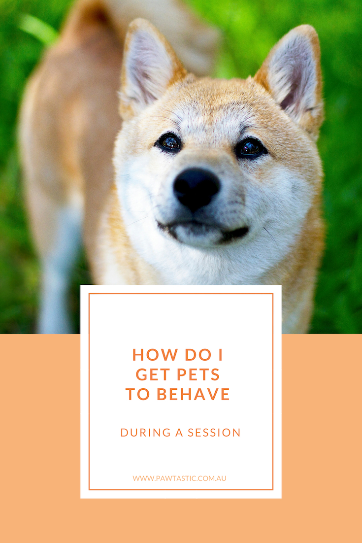 Have you ever wanted to have professional pet photos taken of your dog or cat but thought that you could never get them to behave well enough for photos? Read on to find out how I deal with a pet's behaviour during their professional photo shoot and why your pet's behaviour is normal.