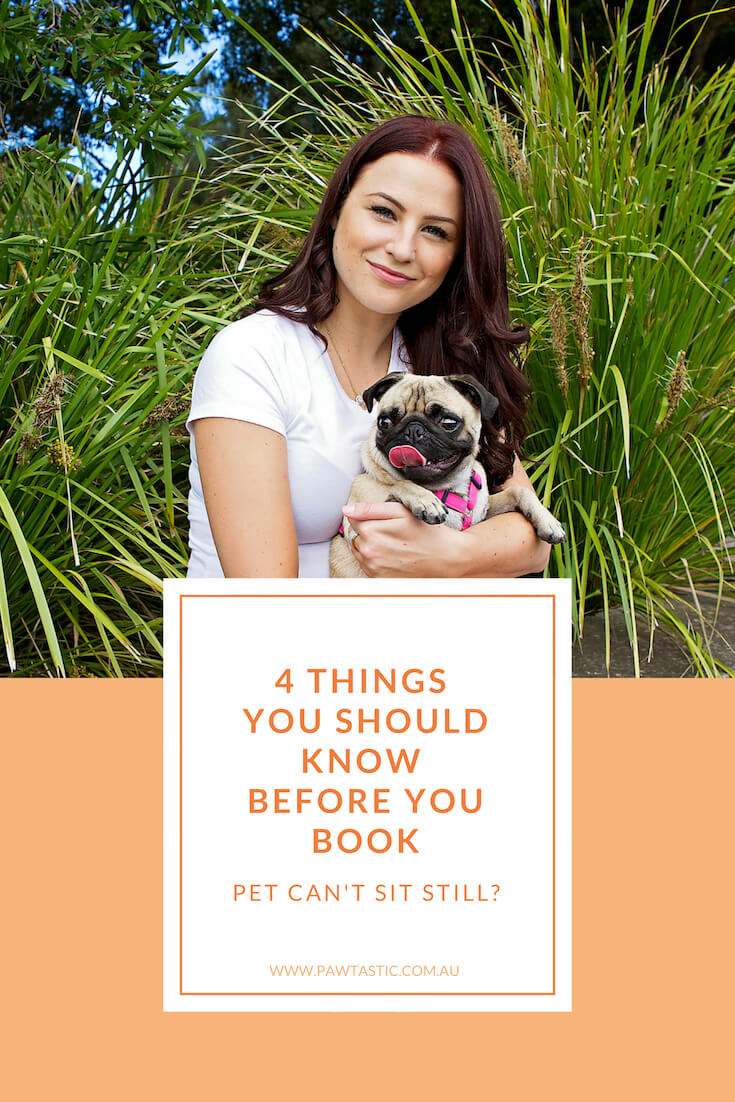 Are you worried about your dog sitting still and being able to behave during a professional pet photography session? If that's the case, here are 4 things you need to know before you book with Pawtastic Photography | Sydney Pet Photographer