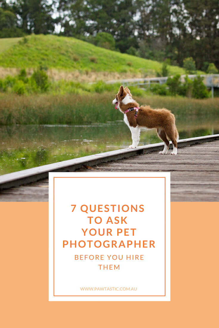 Ever wondered what you should ask a potential pet photographer? Here I lay out seven (7) questions you should ask your pet photographer before you hire them.