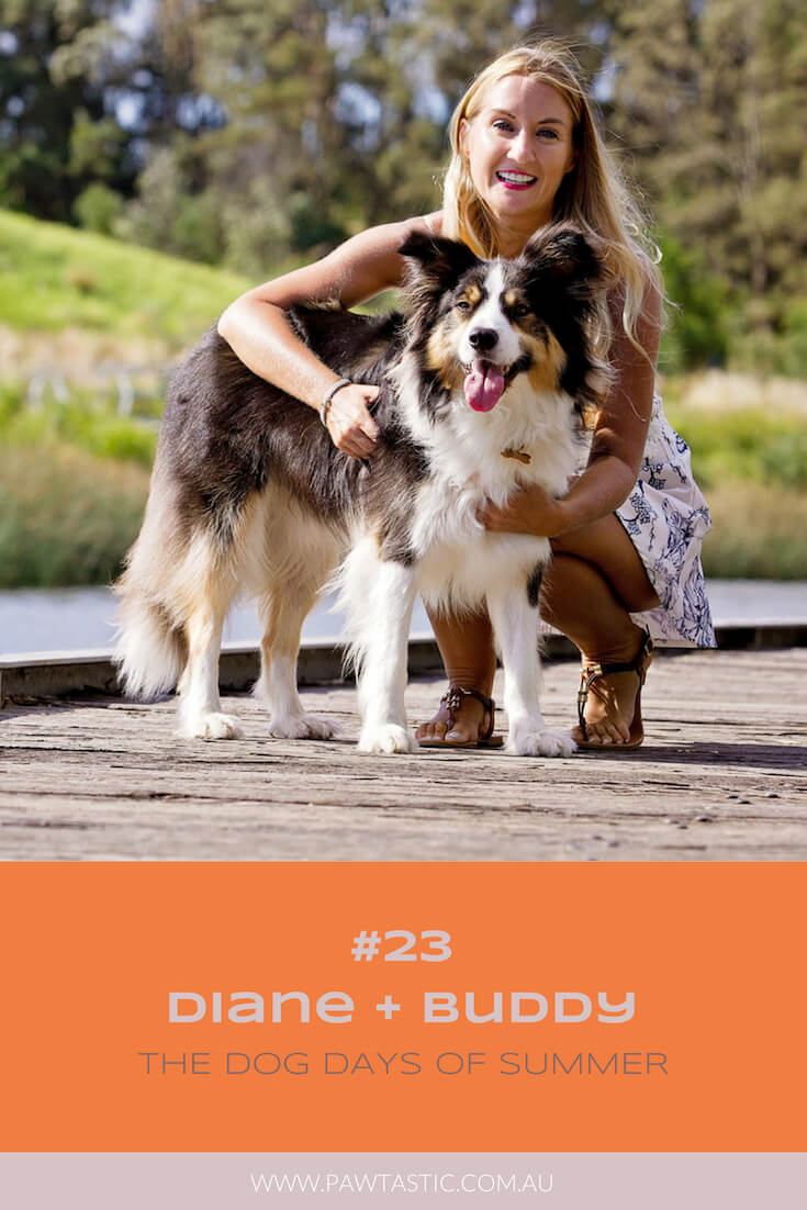 Tri-coloured Border Collie, Buddy, cosies up to his owner on the boardwalk at Sydney Park while getting his photo taken by Sydney pet photographer, Pawtastic Photography