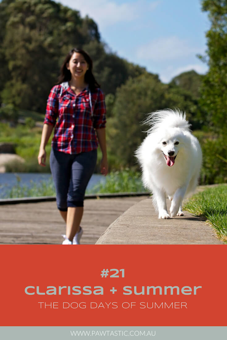 Japanese Spitz dog walking along a pathway with her owner during her Dog Days of Summer professional pet photography session with Pawtastic Photography
