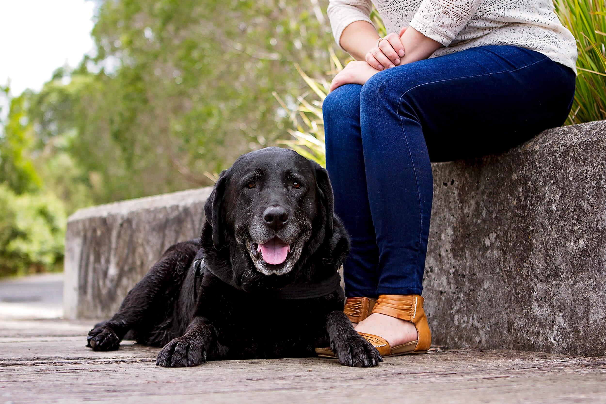 Labrador-dog-pet-photography-session.jpg
