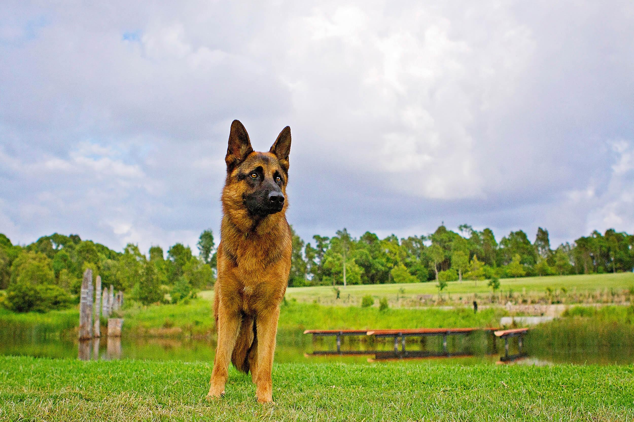 Dog-photo-shoot.jpg