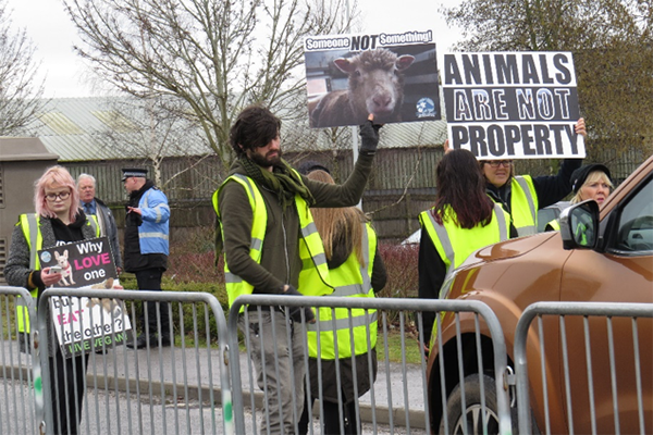 Animal rights activists protesting in front of lorries carrying animals for sale at Norwich Livestock Market Animal Save Vigil, March 2018. (Photographed by Marcin Smietana)