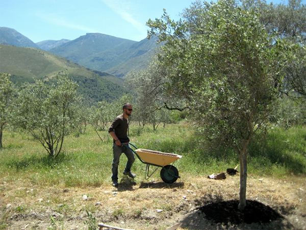 Reworking our approach to the 'ownership' of the planet: on eco-farms most work is done sustainably, and often by hand. Here my partner Alessandro is carrying compost he will be placing around the olive trees on an eco-farm in the Alpujarra Mountains, Spain, 2013 – within the    World Wide Opportunities on Organic Farms    organization. (Photographed by Marcin Smietana)