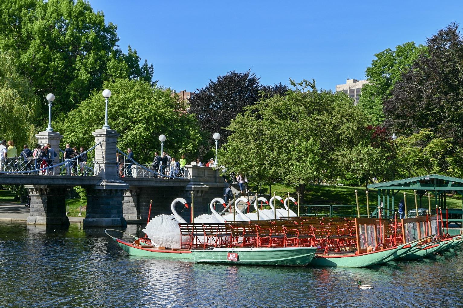 Swan boats on Boston Common.