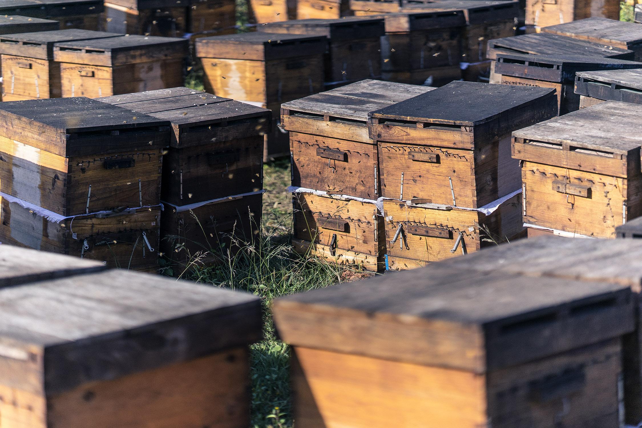 bees_xishuangbanna_hives_yunnan