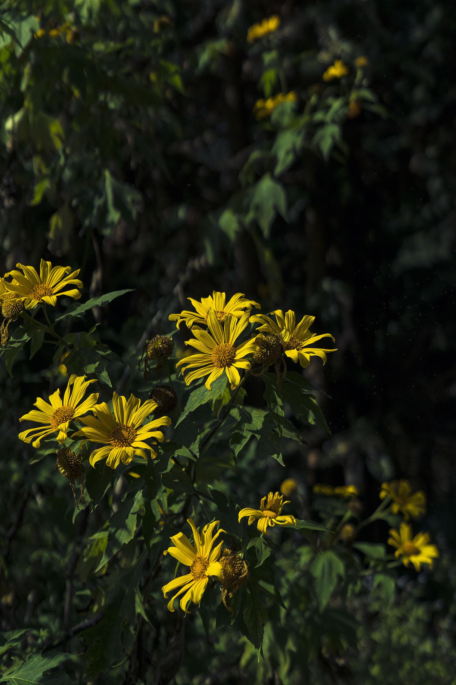 beekeeper_flowers
